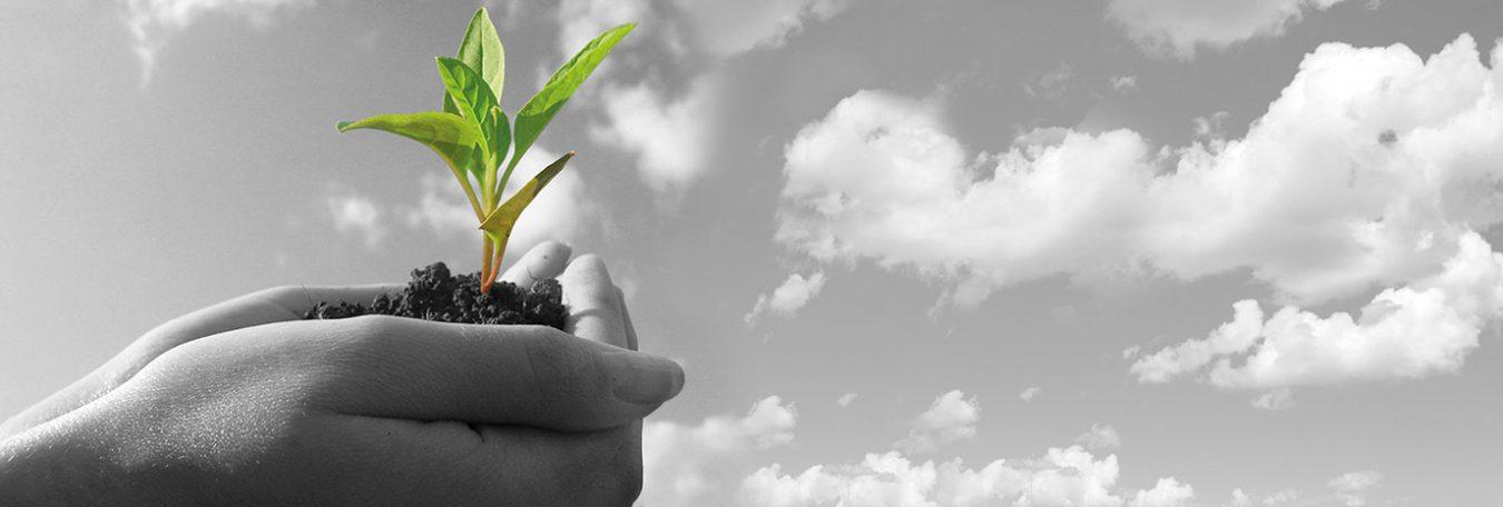 Acreditamos el comportamiento ambiental de nuestros productos
